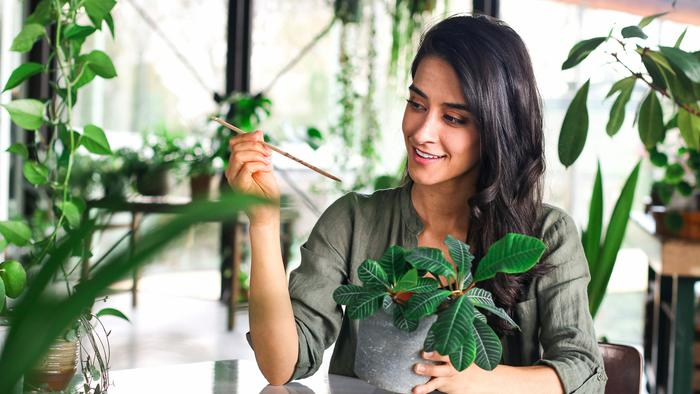 image of 7 Plant Care Mistakes to Avoid