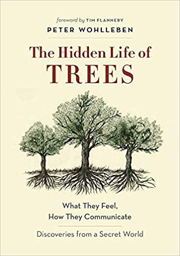image of The hidden life of trees