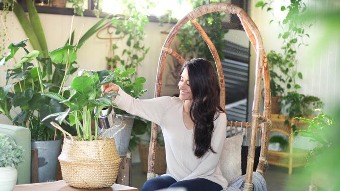 image of Houseplant Care Tips for Beginners